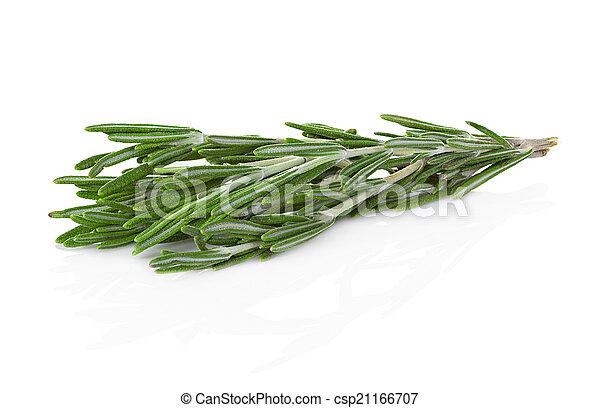 rosemary isolated on white background - csp21166707