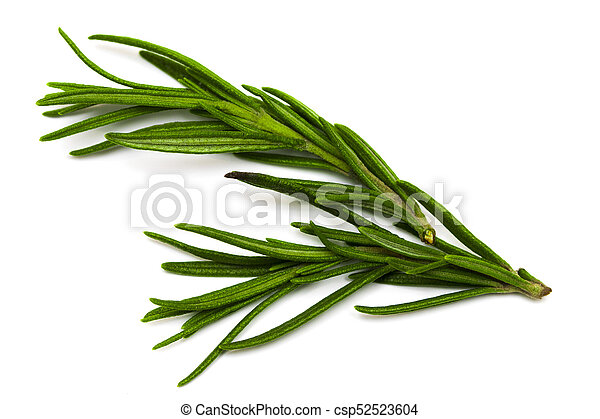 Rosemary isolated on white background, Top view - csp52523604