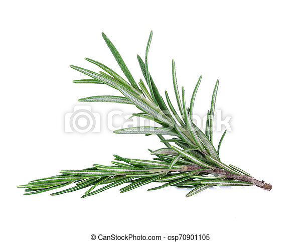 Rosemary isolated on white background - csp70901105