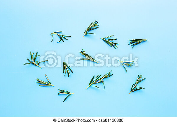 Rosemary on  blue background. Top view - csp81126388