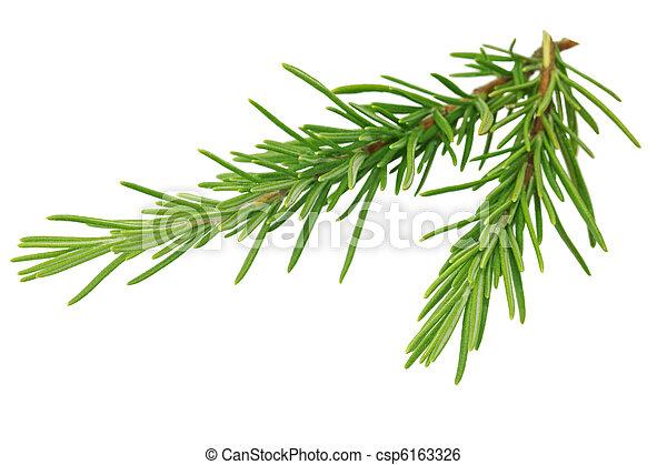 Rosemary - csp6163326