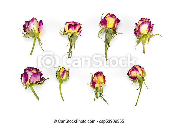 Roses Red And Yellow Flower Buds Branches On White Background