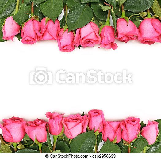 roses roses, blanc, aligné - csp2958633
