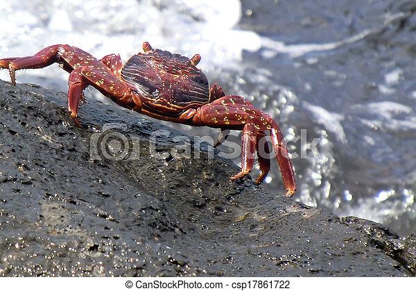 rosso, granchio - csp17861722