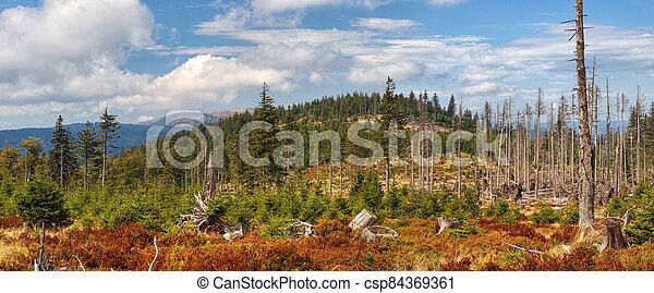 rostoucí, bohémský, kopyto, les, klesání, sumava, krajina, hluboký, mládě, -, živobytí - csp84369361