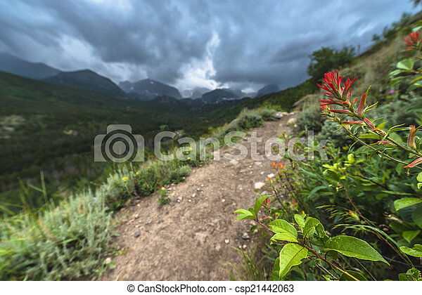 Rosy Paintbrush Flowers - csp21442063