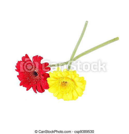 Rote blumen isol gelbe gerbera freigestellt gelber rote blumen isol gelbe gerbera csp9389530 thecheapjerseys Images