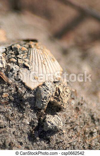 Concha de mar rota - csp0662542