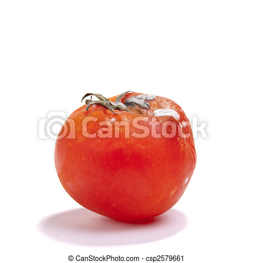 Single red rotten tomato isolated against white background stock rotten tomato csp2579661 ccuart Gallery
