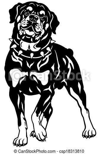Rottweiler Blanco Negro Rottweiler Perro Ilustración
