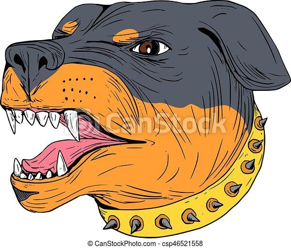 Rottweiler Guard Dog Head Aggressive Drawing - csp46521558