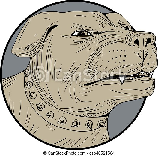 Rottweiler Guard Dog Head Angry Drawing - csp46521564