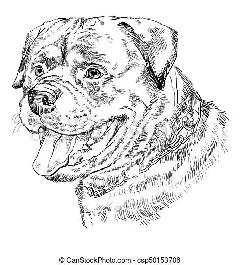Rottweiler bosquejo almacen de fotos e imágenes. 54 Rottweiler ...
