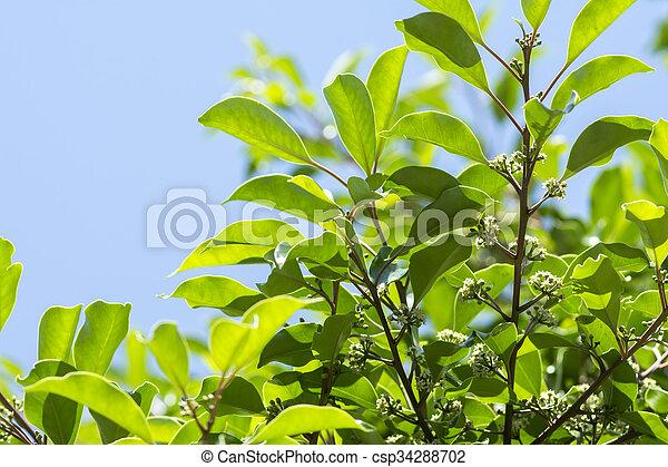 Round leaf holly flowers white round leaf holly flowers under blue sky round leaf holly flowers csp34288702 mightylinksfo