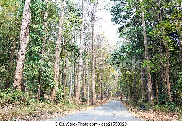 route, gros plan, fond, paysage, forêt - csp21550020
