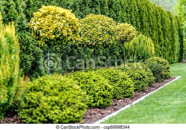 Row of Garden Trees - csp69998344