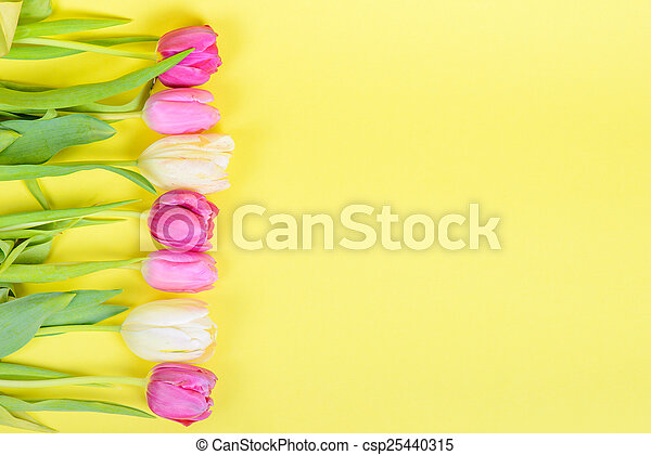 Row of multicolored tulips for border or frame - csp25440315