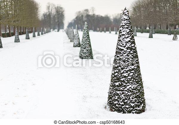 Row of pines under the snow in Parc de Saint-Cloud - csp50168643