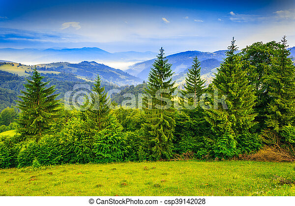 row of trees in mountains - csp39142028