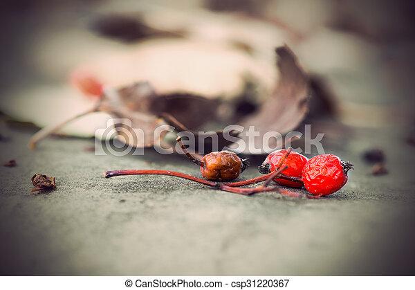 rowan berries with dry brown leaves - csp31220367
