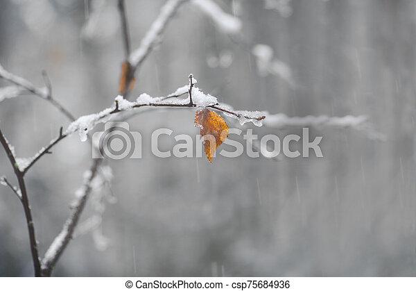 rown and orange leaf on birch tree on snowy autumn day - csp75684936
