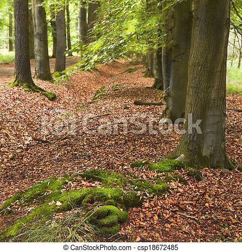 Rows of trees in forest - csp18672485
