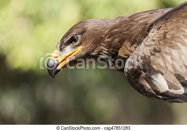 Royal Eagle - csp47851283