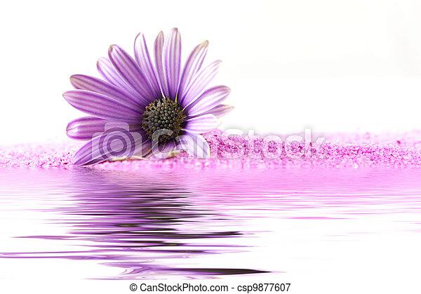 roze bloem - csp9877607