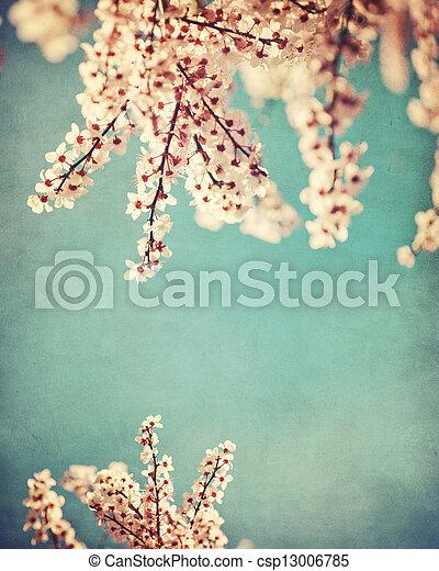 roze, grunge, dogwood, achtergrond - csp13006785