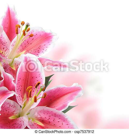 roze, lelies - csp7537912