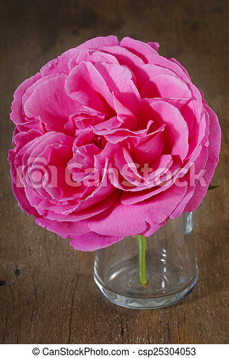 rozen, roze - csp25304053