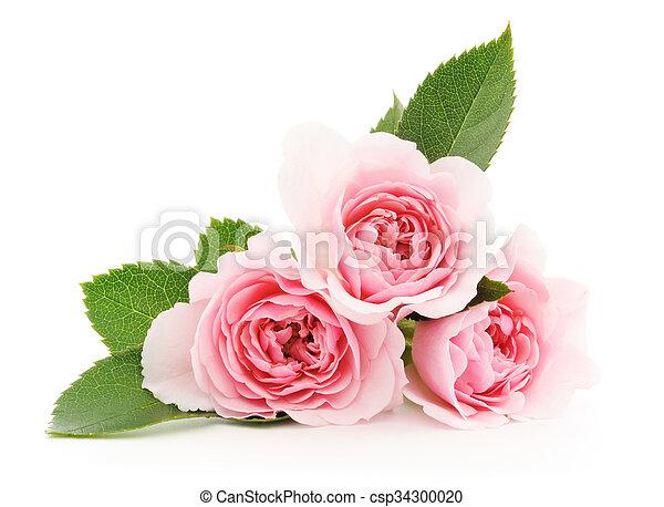 rozen, roze - csp34300020