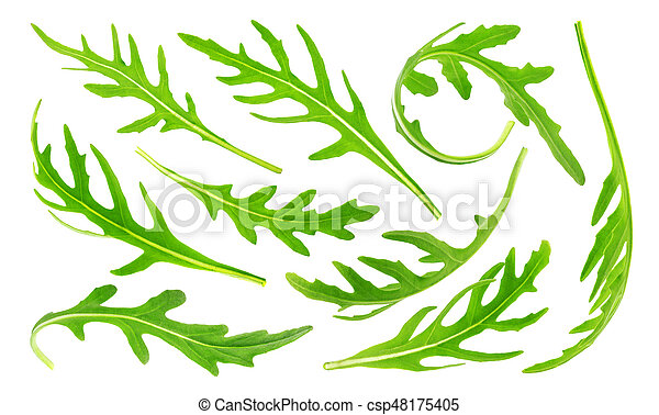 Rucola isolated on white background, collection. Green leaves arugula set, big collection - csp48175405