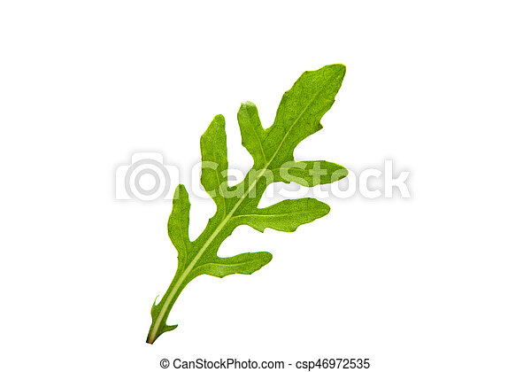 rucola isolated - csp46972535
