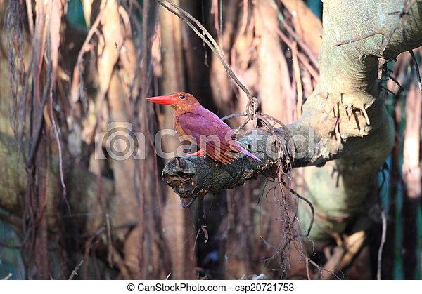 Ruddy Kingfisher  - csp20721753