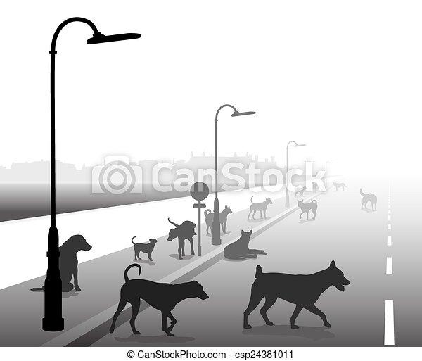 rue, chien, errant - csp24381011