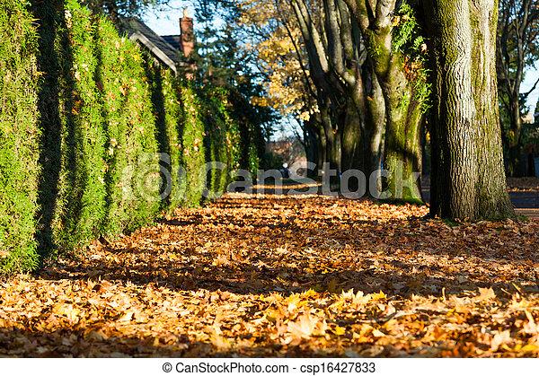 rue ville, automne - csp16427833