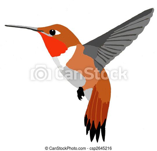 Rufous hummingbird drawing - photo#34