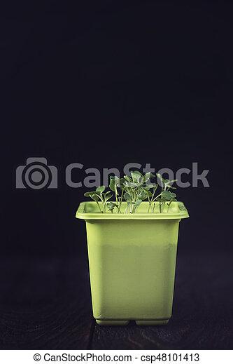 Rukkola growing in a pot - csp48101413