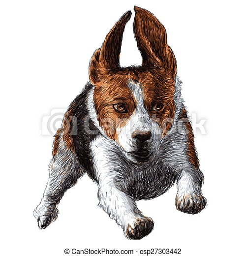 Image of running beagle hand drawn vector.  Running