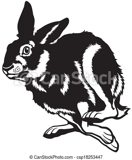 running european hare  - csp18253447