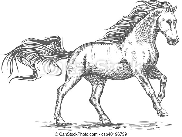 Running galloping white horse sketch portrait - csp40196739