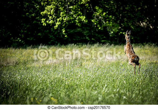 Running, Jumping Deer - csp20176570