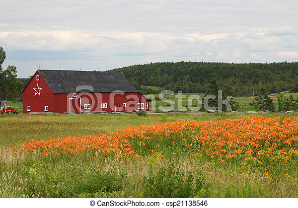 Rural barn and tiger lilies - csp21138546