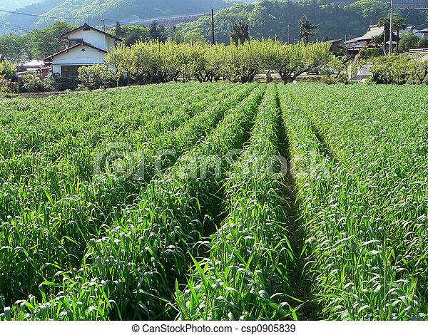 rural, campo agricultura - csp0905839