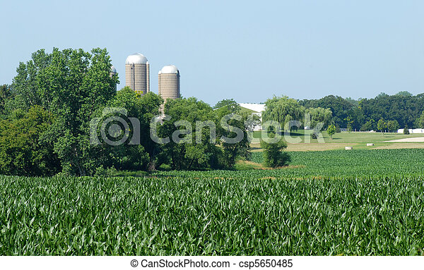 Rural cornfield with farm buildings in the background - csp5650485
