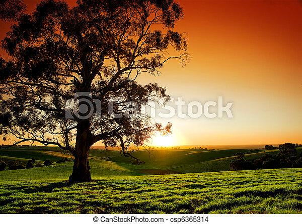 rural, coucher soleil - csp6365314