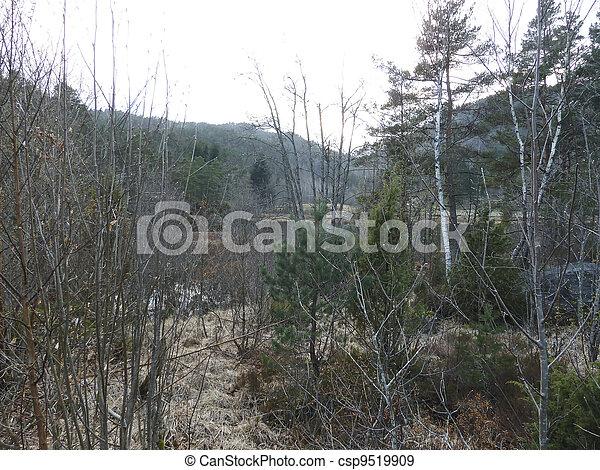rural forest in norway - csp9519909