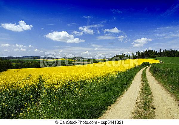 Rural landscape and road - csp5441321