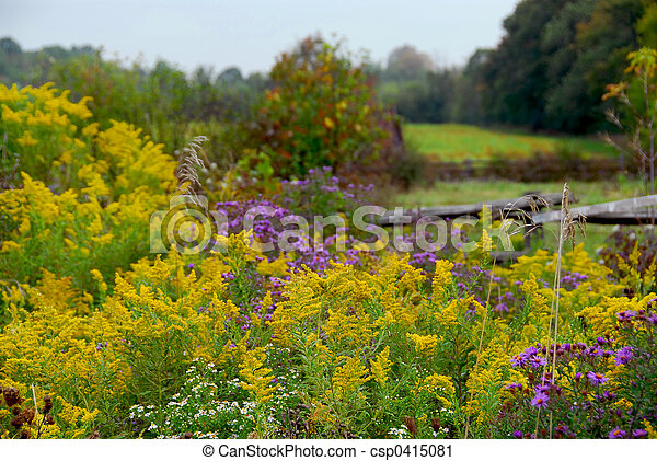 Rural landscape - csp0415081